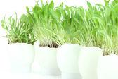Grass in eggs — Stock Photo