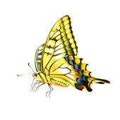 бабочка махаон (махаон) старого света. изолированные на белом фоне — Стоковое фото