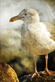 White bird seagull — Stock Photo
