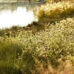 Wild flowers meadow near lake — Stock Photo #43517937