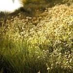 Wild flowers meadow near lake — Stock Photo #43518009