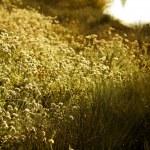 Wild flowers meadow near lake — Stock Photo #43518425