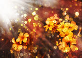 Little flowers — Stock Photo