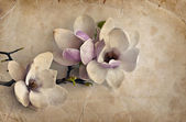 Romantic background with magnolia flowers — Stock Photo