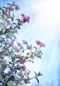 Kleine mooie roze bloemen — Stockfoto