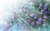 Little beautiful pink flowers — Стоковое фото