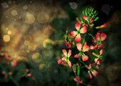 маленькие красные цветки — Стоковое фото