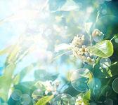 Little white flowers — Stock Photo