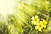 Kleine gele bloemen — Stockfoto