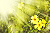 Little yellow flowers — Stockfoto