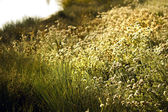 Wild flowers meadow near lake — Stock Photo