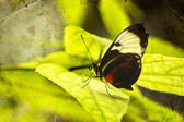 Butterfly on green leaf — Stock Photo
