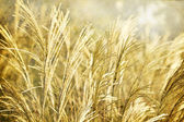 Wild grass background — Foto Stock