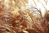 Wild grass background — Stock fotografie