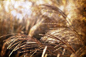 Wild grass background — Stockfoto