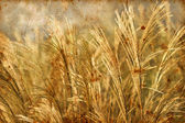 Wild grass background — Zdjęcie stockowe