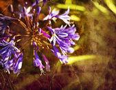 голубой цветок — Стоковое фото