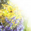 Spring background with beautiful yellow flowers — Stock Photo