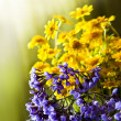 Spring background with beautiful yellow flowers — Stock Photo #43520813