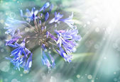 Blue flower — Stok fotoğraf