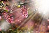 Piccoli fiori rossi — Foto Stock
