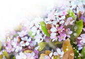 Little white flowers — Stock Photo