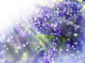 Little beautiful purple flowers — ストック写真