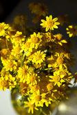 Lente achtergrond met mooie gele bloemen — Stockfoto