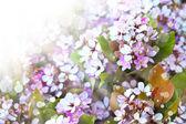 Pequeñas flores blancas — Foto de Stock