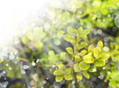 Green leaves background with sunshine — Stock Photo