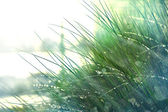 Grass with water drops and sunshine — Stock Photo