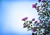 美丽的小粉红花 — 图库照片