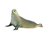 Harp seal — Stok fotoğraf