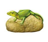 Green lizard on a stone — Stock Photo