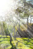 Spring nature background with sunshine — Foto de Stock