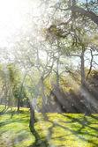 Spring nature background with sunshine — Zdjęcie stockowe