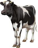 Standing cow — Stock Vector