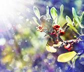 Little Red-flowered bush. — Stock Photo