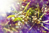 White little flowers on the tree — Stock Photo