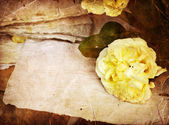 White roses, petals and handmade paper — Stock Photo
