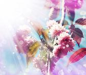 Kiraz ağacı çiçek — Stok fotoğraf