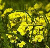 Yellow flowers — Foto de Stock