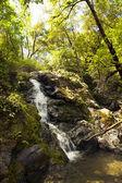 Mountain stream flows down from the mountains. — Stock Photo