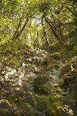 Horský potok teče dolů z hor. — Stock fotografie