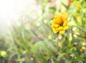 Little yellow flower — Stock fotografie