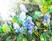 Beautiful blue flowers — Stock Photo
