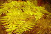 Green fern leaves. — Stock Photo