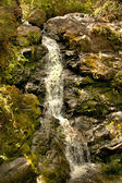 Mountain stream flows down from the mountains. — Stock Photo