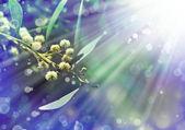 White little flowers — Stock Photo