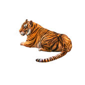 Tiger laying — Stock Photo